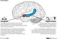 format proposal mybrain15 post traumatic stress disorder ptsd resources and cbt