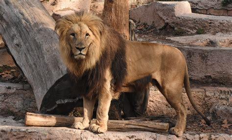 fotos animales zoo barcelona mammals drupal