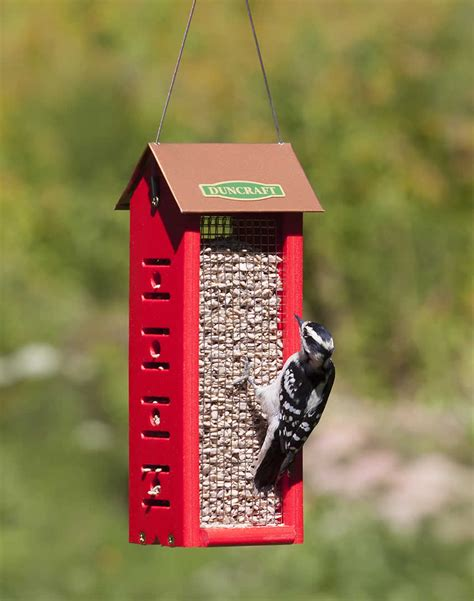 pileated woodpecker feeder plans