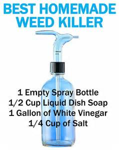 Organic Ant Killer Best Homemade Weed Killer And Other Ways To Kill Weeds