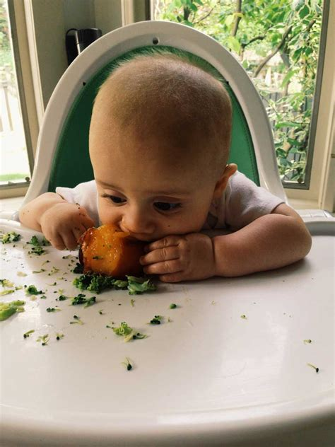 Introducing Baby Kiwi by Baby Led Weaning A Primer Cooking For Kiwi Bean