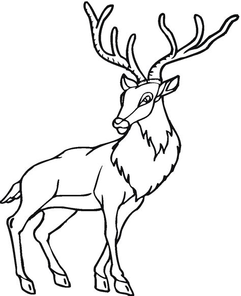 coloring pages of deer bucks coloring pages of deer bucks coloring pages for free