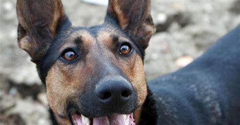 neurological problems in dogs neurological diseases ehow uk