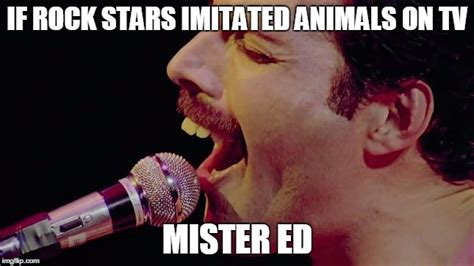 Mr Ed Meme - image tagged in freddie mercury imgflip