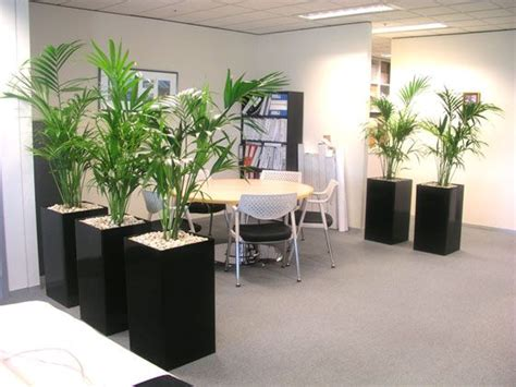 plant partition use individual pots with large plants to make a partition
