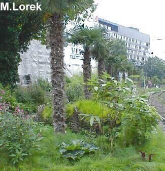 bambus im garten pflanzen 2002 exoten in duesseldorf