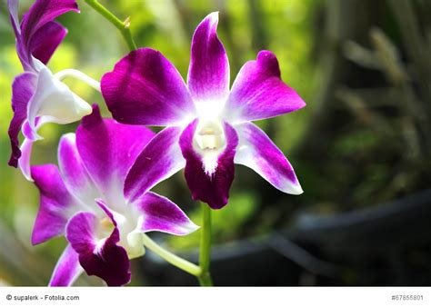 Plant Lovers university of latvia presents an exhibition of orchids