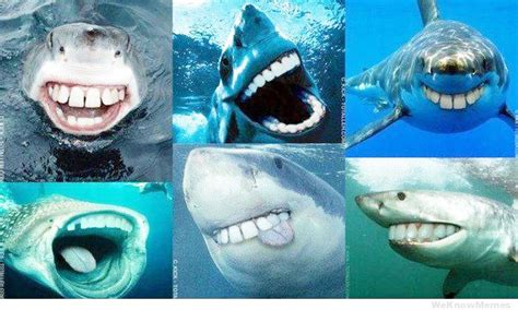 with human teeth sharks with human teeth reddit www pixshark images galleries with a bite