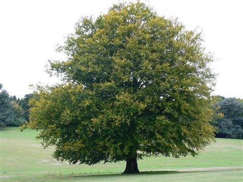 vendita alberi da giardino alberi vendita alberi vendita alberi
