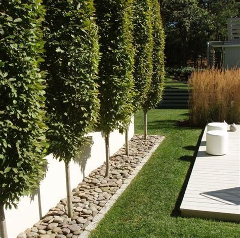 best plants for backyard privacy best 20 privacy trees ideas on pinterest privacy