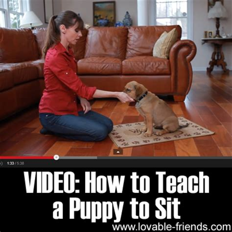 how to teach a to sit how to teach a puppy to sit lovable friends