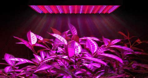 led grow lights 2017 best led grow lights reviews for 2017 skunkology com