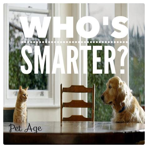 whos smarter cats or dogs who s smarter cat or owners pet age