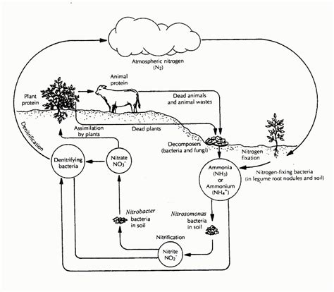 carbon cycle diagram worksheet carbon cycle coloring page az coloring pages