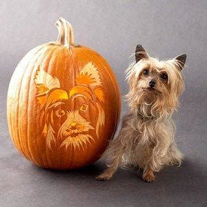 constipated puppy 4 weeks of pumpkins and pooches will my me