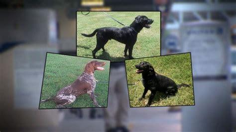 adopt tsa dogs adopt a from the tsa abc news