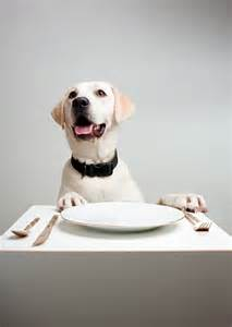 top 10 foods dogs can eat best large breed puppy food guide