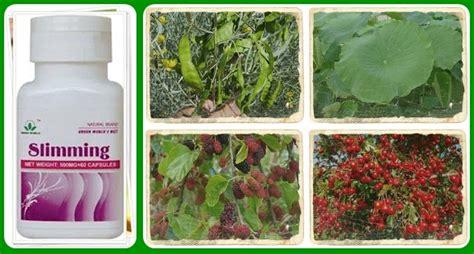 Obat Gemuk Tradisional Cina obat tradisional pelangsing alami kirim barang dulu