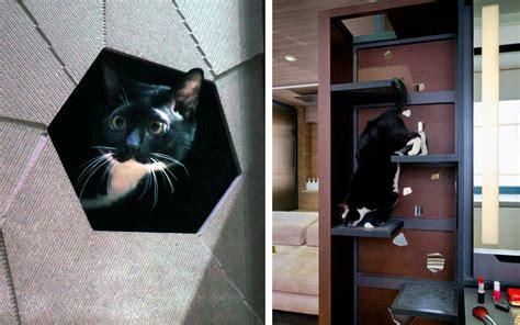 arredare mini appartamenti arredare un mini appartamento a misura di gatto animali
