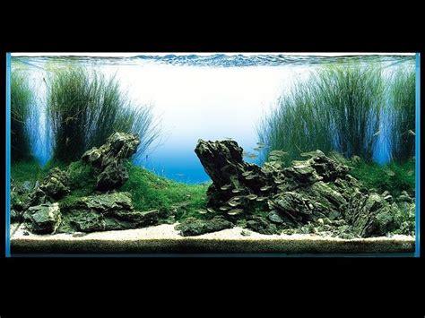 aquarium design amano indonesia 126 best images about planted tanks on pinterest dutch