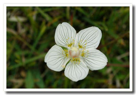 fiori di co nomi nomi di fiori carla patricelli