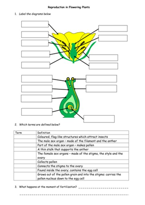 plant reproduction worksheet plant reproduction worksheet pack by beckystoke uk teaching resources tes
