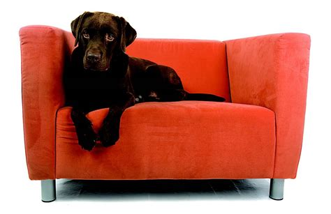 Upholstery Cleaning by Reasons To Use Professional Upholstery Cleaning