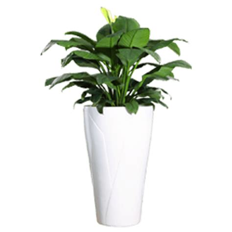 Plants And Planters by Premium Fiber Glass Planter Tulip White Greenmylife