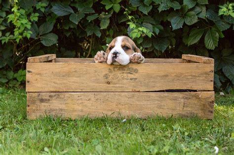 asl pavia orari apertura allevamento beagle bassotti nani e kaninchen a pelo duro