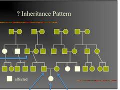 inheritance pattern quizlet 14 wray mendelian inheritance flashcards quizlet