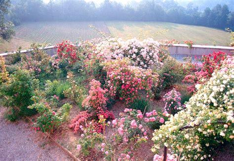giardini fioriti immagini benvenuti sui balconi e nei giardini fioriti