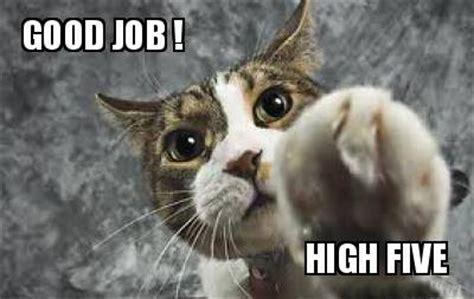 Great Job Meme - great job cat meme www pixshark com images galleries