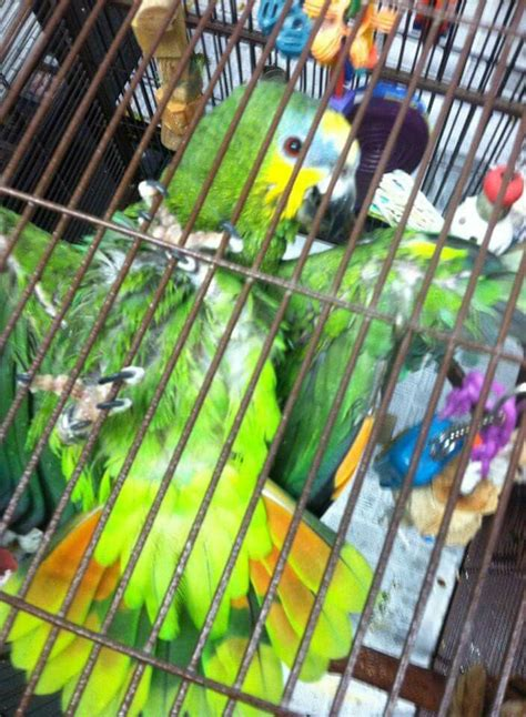 shelters in ri 39 best parrots in need of forever homes rhode island parrot rescue riparrots org
