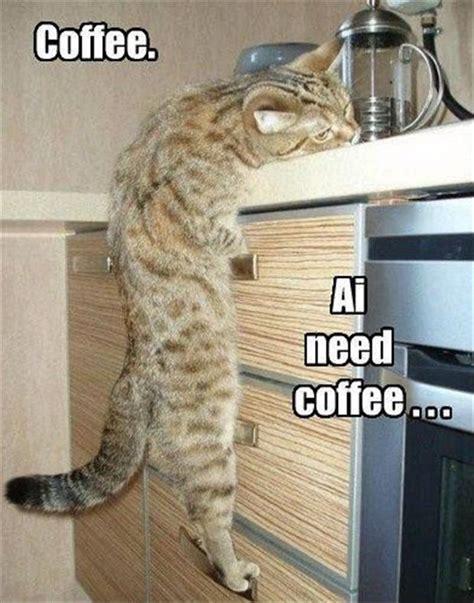 Coffee Meme - coffee ai need coffee cat memes comix funny pix