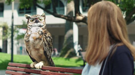 who voices the owl in americas best commercial americas best owl commercial wgu college of it acronyms