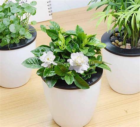 gardenia seeds fragrant  seasons evergreen indoor