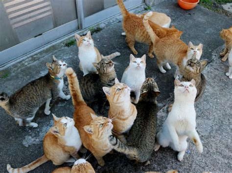 caretaker of japan s cat island is overwhelmed with japan s cat island receives massive food donations after