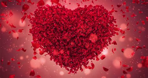 Wedding Hd Backgrounds With Hearts by Flower Falling Petals In