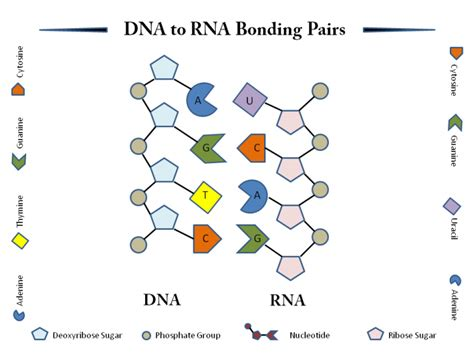 pattern matching dna images images important expasy sib bioinformatics