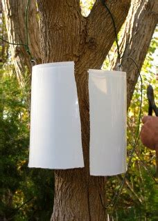 tree baffles to baffle squirrels welcome wildlife com