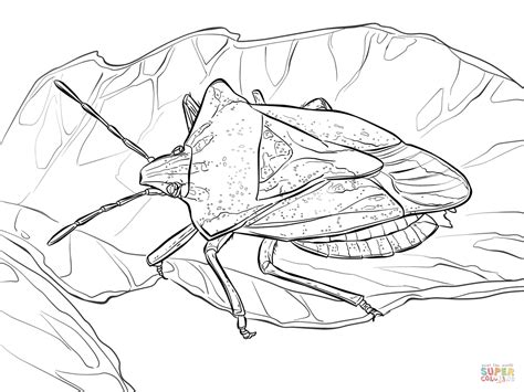 stink bug coloring page free printable coloring pages