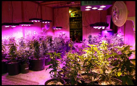 lade grow plant grow light for indoor crxsunny led 1000w review