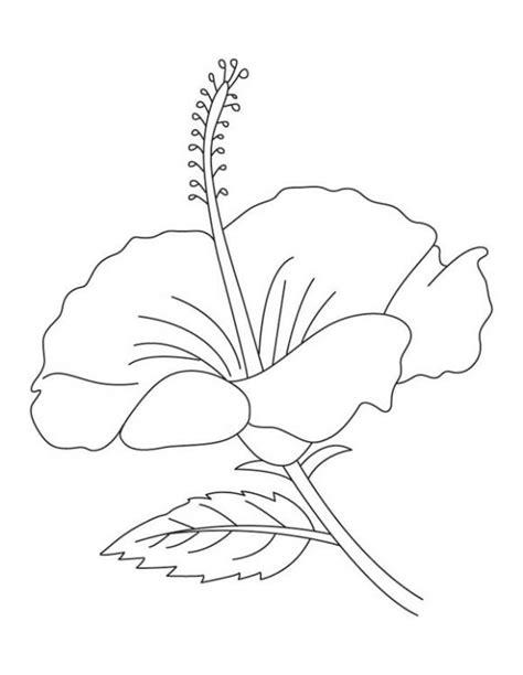 mewarnai gambar bunga lili  warna