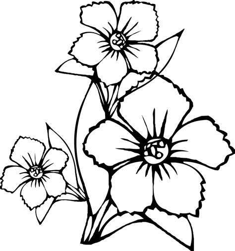 free coloring pages of tropical flowers tropical flower drawings cliparts co