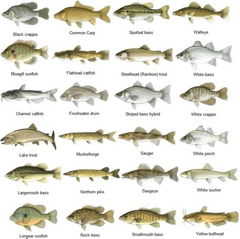 species chart fish identification chart car interior design