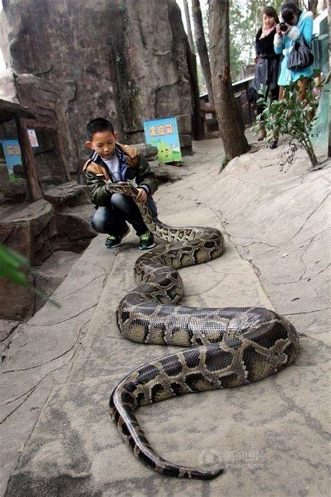 animal two boy and one this a slytherin parselmouth if i saw one