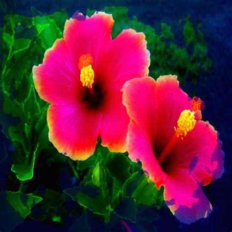 imagenes sorprendentes de flores fotos de flores exoticas gratis imagenes de fondo para