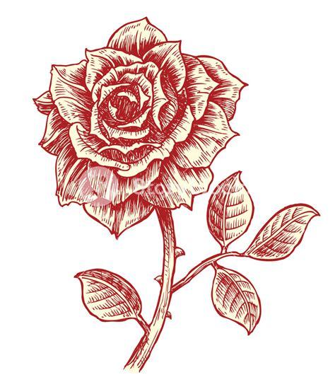 vintage rose vector illustration royalty free stock image