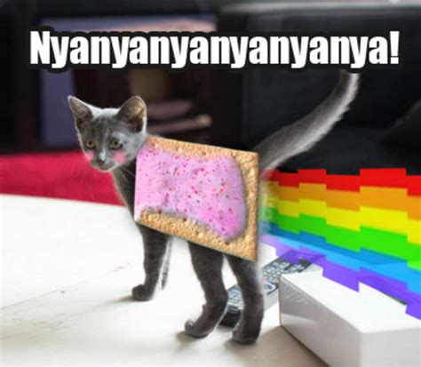 Nyan Cat Know Your Meme - deadmau5 s new cat nyan cat pop tart cat know your meme