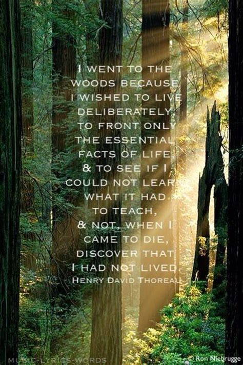 walden book themes thoreau 10 handpicked ideas to discover in quotes see